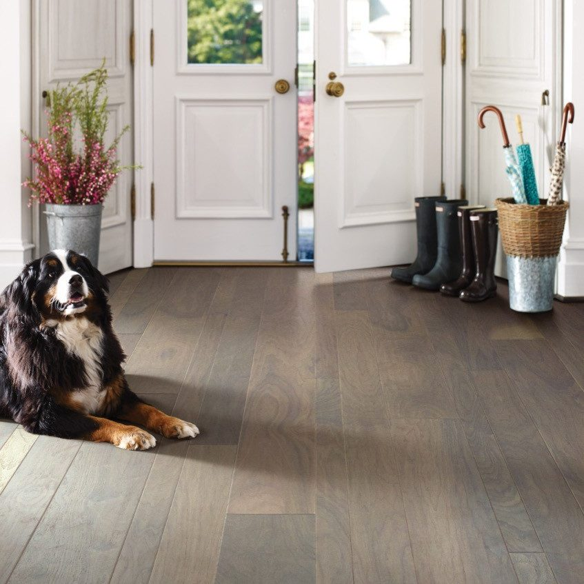 Pet friendly floor | Westport Flooring