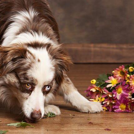 Puppy on floor | Westport Flooring